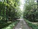 Buňkovaná lužní cesta nedaleko obce Poborszów, Łęg Zdzieszowicki.
