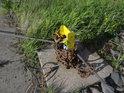Zajišťovací traverza zabetonovaná v zemi slouží jako kotevní kolík přívozu Pomorsko.