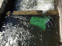 Odpadkový koš v rybochodu při jezu na Odře u Bernartic.