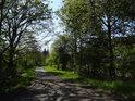 Asfaltová cesta podél levého břehu řeky Odry v Loučkách.