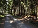 Lesní cesta od Kozlova, před odbočkou k prameni Odry.