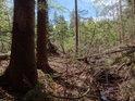 Odra vstupuje do lesního porostu.