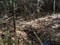 Odra brzy získá spád a začne sílit, zatím míří do hustého lesa.