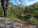 Památný dub na pravém břehu Odry v úseku Heřmánky – Jakubčovice nad Odrou.