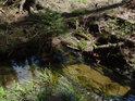 Dno Odry v horním toku je píčité až bahnité.