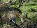 Levostranný přítok posiluje Odru pod Oderským vrchem.