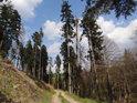 Cesta po levém břehu Odry výše nad hladinou.