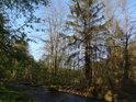 Odra nedaleko soutoku s Klikatým potokem.