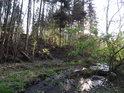 Klikatý potok nad soutokem s Odrou.