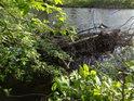 Soutok Odra / Havranův potok je překrytý křovím.