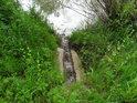 Nenápadný levobřežní přítok Odry u Košatky je spojená voda několika potoků s příměsí vod Mlýnky, levobřežního náhonu.