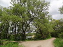 Rybník Velká Louka za rozcestím na levém břehu Odry.