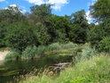 Potok Trzyciana nad ústím do Odry.